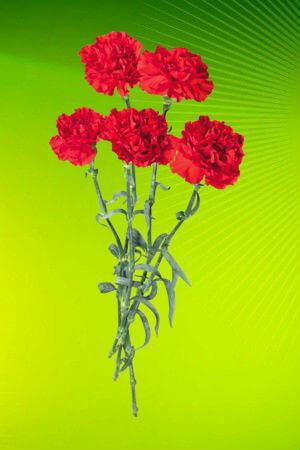 Раскраски цветы распечатать или скачать   Детские раскраски
