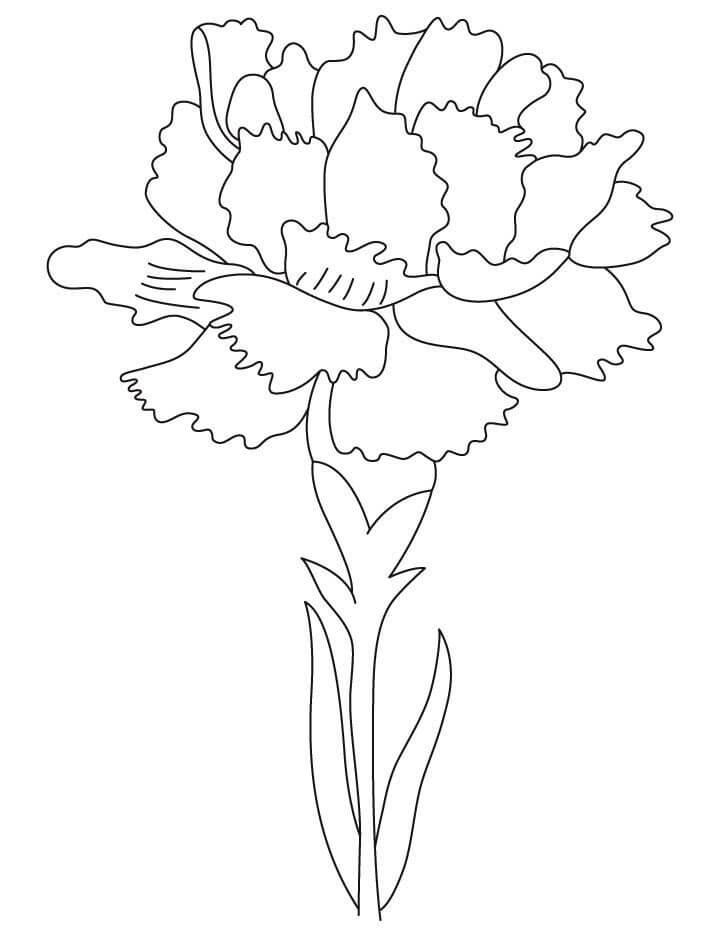 Цветы к 9 мая картинки раскраски