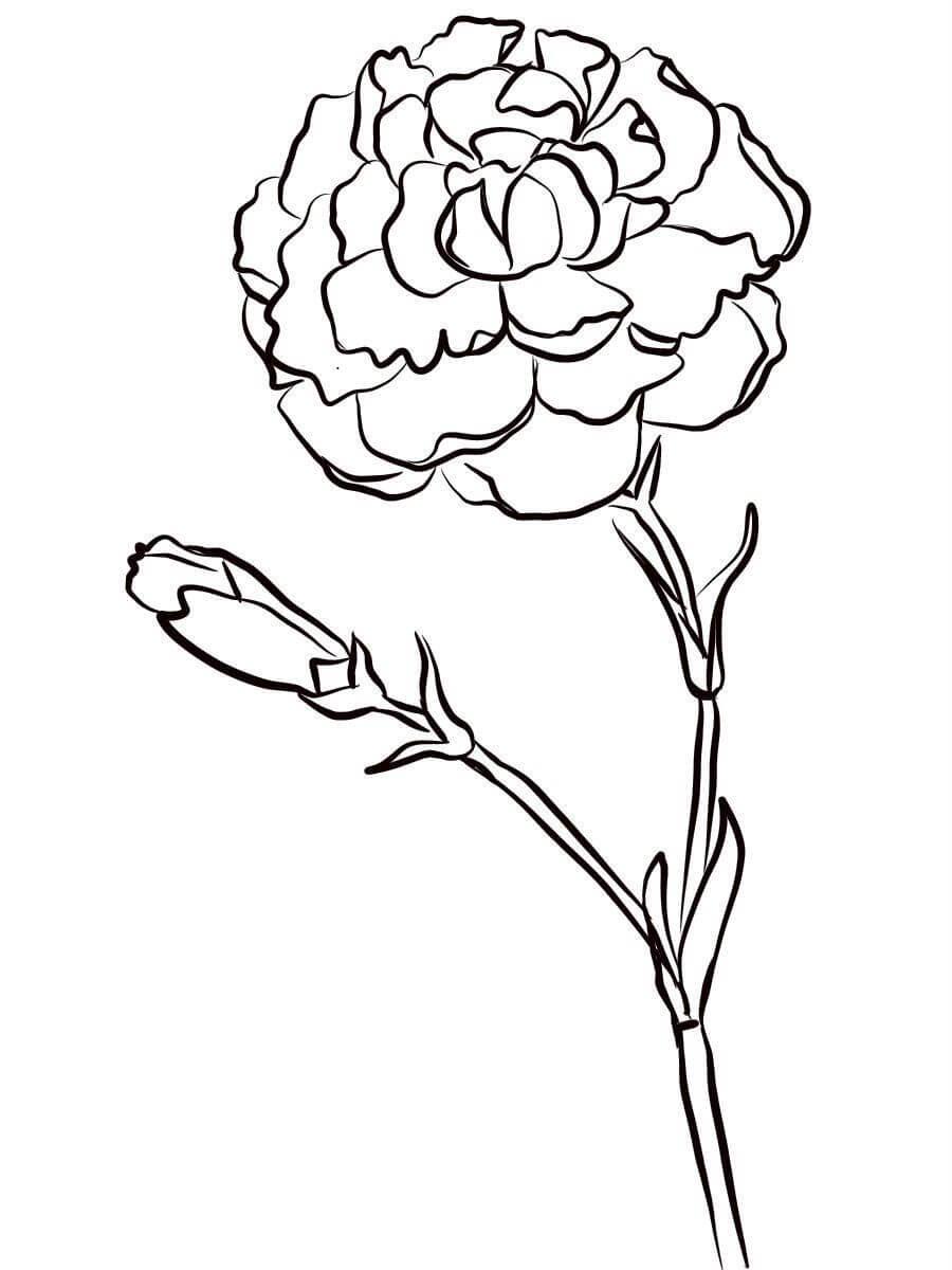 цветы гвоздика картинка раскраска окончании обучения