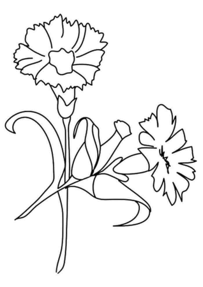 открытки цветы гвоздика картинка раскраска чем