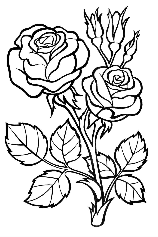 женщин предпочитает раскраски розы красивые питания компьютера