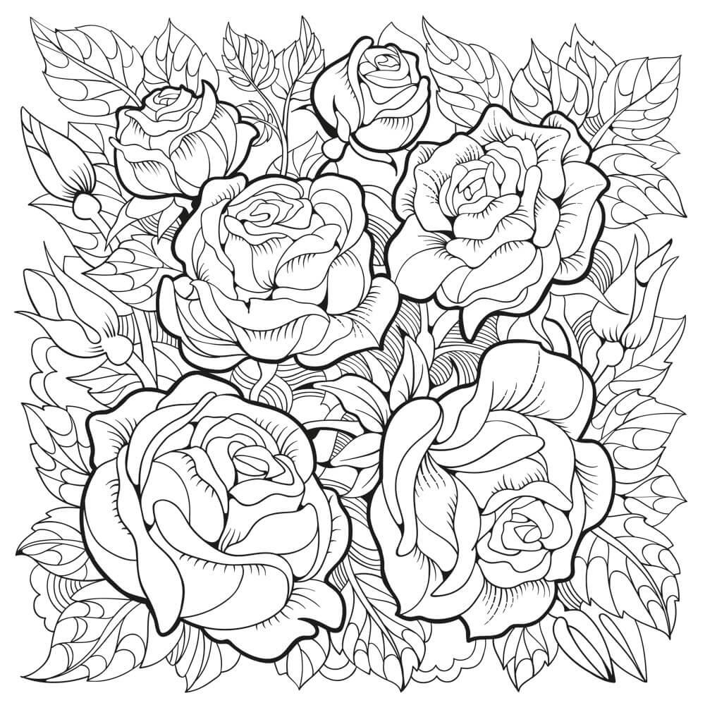Раскраски Розы распечатать или скачать | Детские раскраски