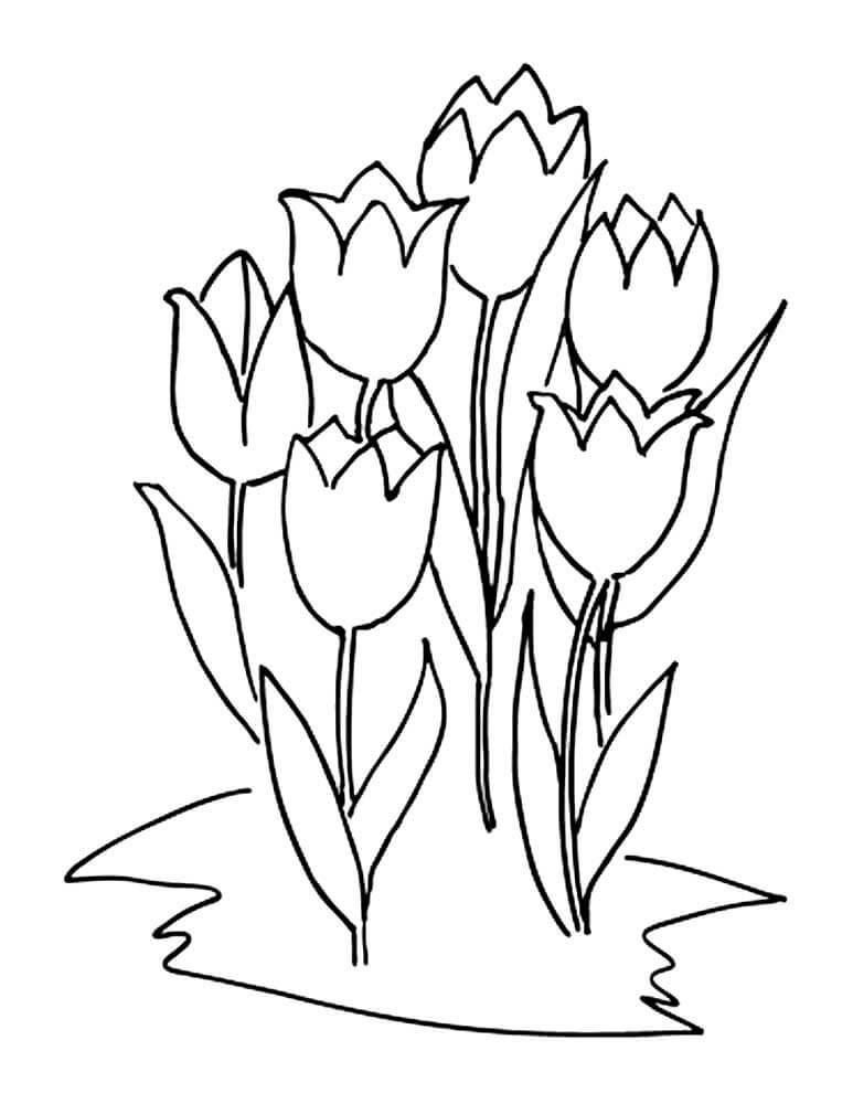 Рисунок тюльпана для детей шаблоны, картинки дмитрий надписи