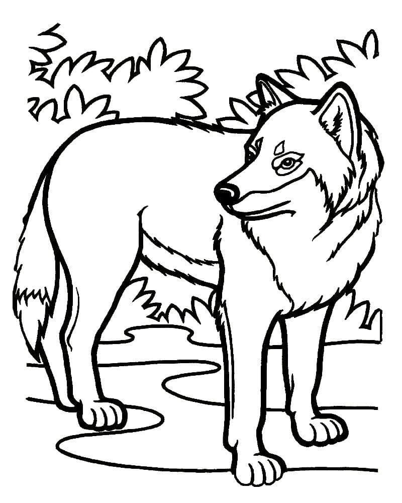 пусть картинки для раскраски волка осветлить кончики волос